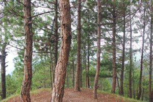 Forêt-Landes